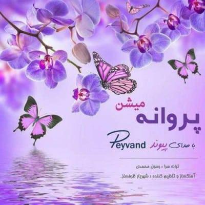 Peyvand – Parvaneh Mishan - دانلود آهنگ پیوند به نام پروانه میشن