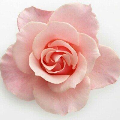 Flower 400x400 - دانلود آهنگ گلی گلی گل کنم